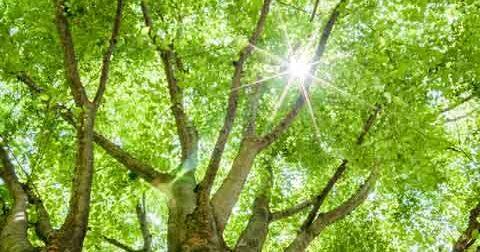 冬日・熱帯夜・真夏日・猛暑日の日数の推移
